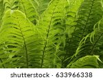 young fern in spring | Shutterstock . vector #633966338