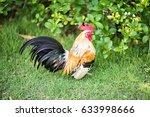 a mature cock on the garden | Shutterstock . vector #633998666
