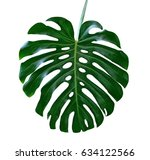 green leaf of a tropical flower ... | Shutterstock . vector #634122566
