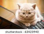 Stock photo close up little british lilac kitten lying on a laptop 63423940
