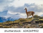 guanaco on top of the mountain... | Shutterstock . vector #634269902