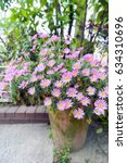 Flower Pot Of Aster Cordifoliu...