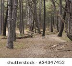 Stock photo coastal pine tree woods background 634347452