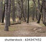 Woods Background.