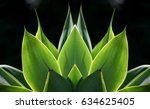 agave attenuata  a native ... | Shutterstock . vector #634625405