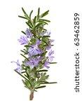 rosemary herb leaf sprig in... | Shutterstock . vector #63462859