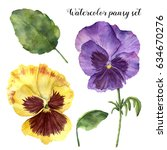 Watercolor Pansy Set. Hand...