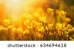field of spring flowers and... | Shutterstock . vector #634694618
