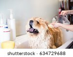 Stock photo chow chow at grooming salon having bath selective focus on dog s muzzle 634729688