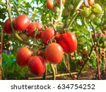 tomato fruit with water drop... | Shutterstock . vector #634754252