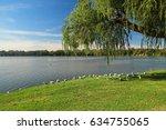 Flock Of Seagulls In Australia