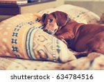 Old Brown Dog  The Dachshund...