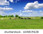 cows grazing on pasture      | Shutterstock . vector #634819628