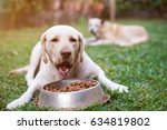 labrador eat from metal bowl... | Shutterstock . vector #634819802