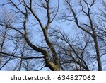The Limbs Of Trees Relating To...