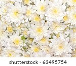 An Image Of A Nice White Flowe...