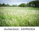 Wild Grass Background  Thatched