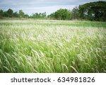Wild Grass Background  Thatched