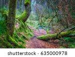 dark forest trail landscape | Shutterstock . vector #635000978