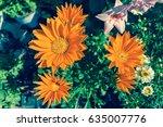 Bright Orange Gazania Flower O...