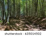 Wild Path In The Forest. Lots...