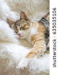 Stock photo sleeping cute cat 635035106