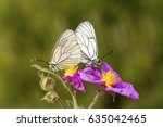 butterfly in nature | Shutterstock . vector #635042465