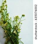 flowers on white background | Shutterstock . vector #635076002