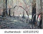 burnt trees in the smoky...   Shutterstock . vector #635105192