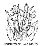 tulip flowers bouquet. vector...   Shutterstock .eps vector #635136692