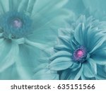 dahlia turquoise flowers   on... | Shutterstock . vector #635151566