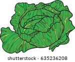 cabbage color hand drawn... | Shutterstock .eps vector #635236208