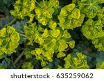 green leaf background for... | Shutterstock . vector #635259062
