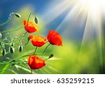 Poppy Flowers Field Nature...