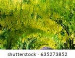 beautiful common laburnum... | Shutterstock . vector #635273852