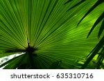 sugar palm leaf. | Shutterstock . vector #635310716