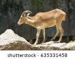 image of a mountain goats... | Shutterstock . vector #635331458