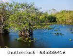 swamp with green grass and blue ...   Shutterstock . vector #635336456