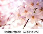 malus halliana flower... | Shutterstock . vector #635346992