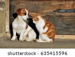 Stock photo a cat and a dog outside the cottage 635415596