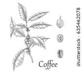 coffee tree hand drawing... | Shutterstock .eps vector #635462078