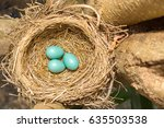 American Robin's Eggs And Nest...