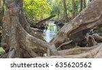 art of roots mangrove    Shutterstock . vector #635620562