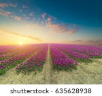 landscape with tulips ... | Shutterstock . vector #635628938