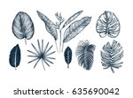 tropical collection. botanical... | Shutterstock .eps vector #635690042