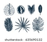 tropical collection. botanical... | Shutterstock .eps vector #635690132