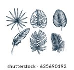 tropical collection. botanical... | Shutterstock .eps vector #635690192