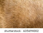 Cat Fur Texture  Pattern ...