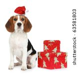 Beagle Puppy With Santa Hat An...