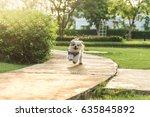 Stock photo shih tzu dog running on grass and happy 635845892